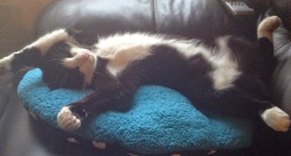 The Laura Lee Blog – Farewell, My Feline Friend